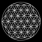 radykalny herbalizm.jpg-1